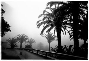palmenimnebel